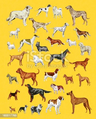 Variety of Dogs