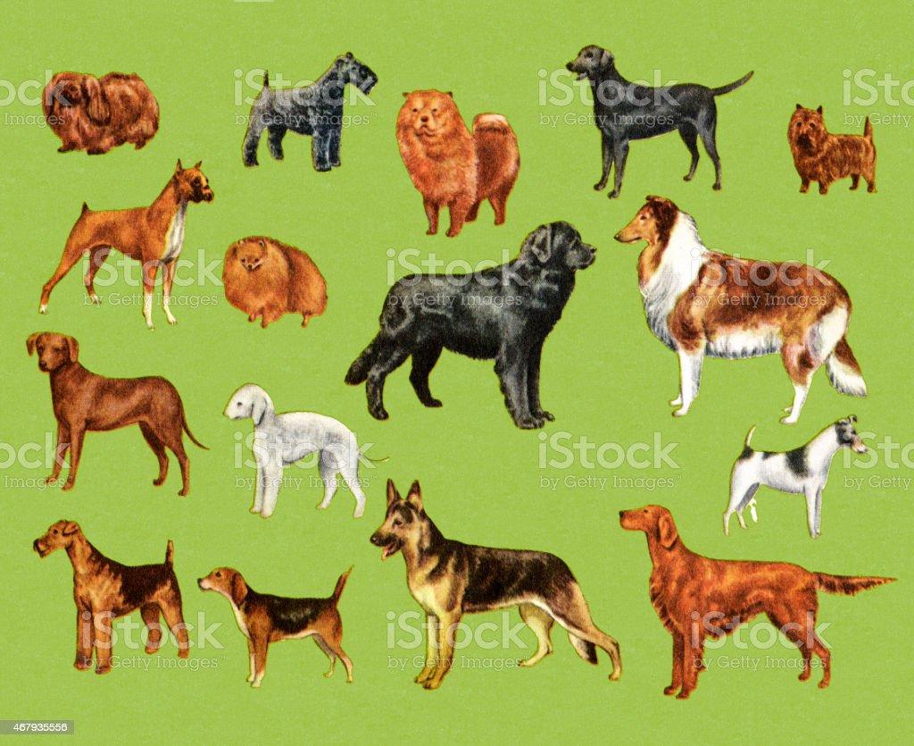 Variety of Dogs vector art illustration
