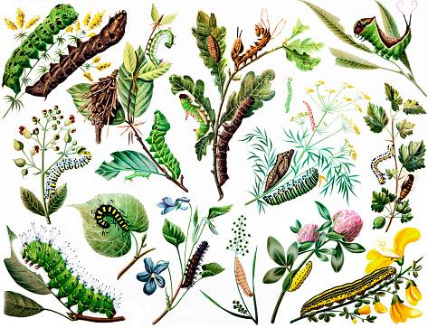Various caterpillar