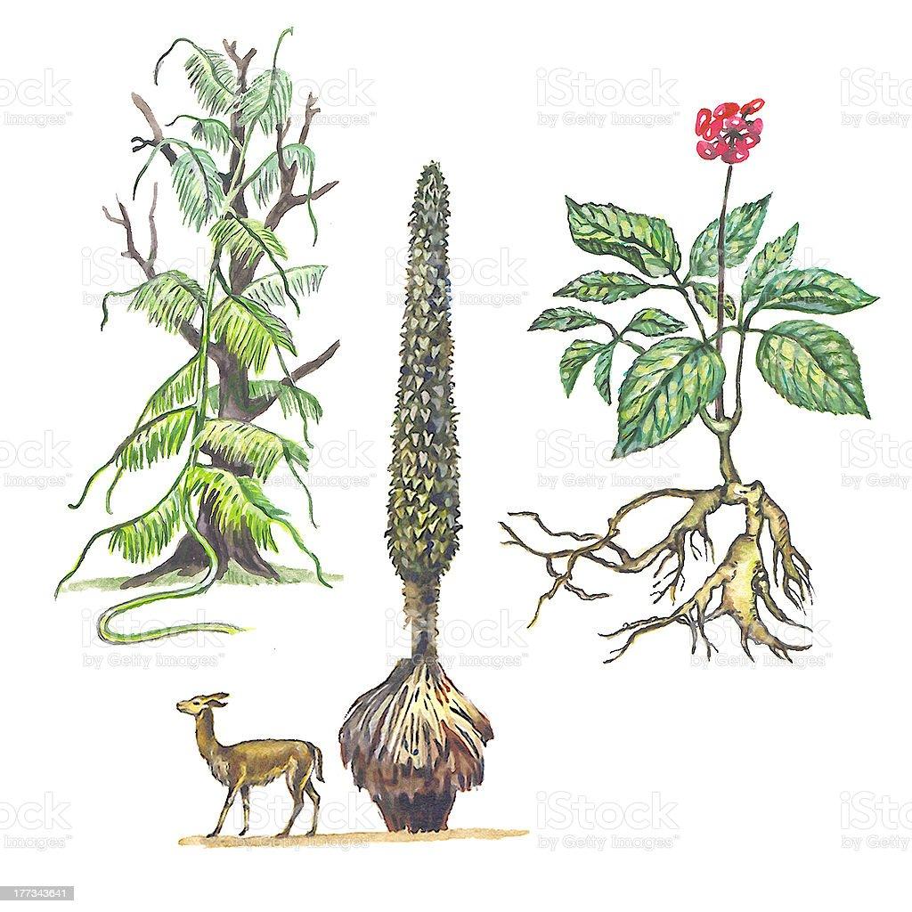 Varias plantas - ilustración de arte vectorial
