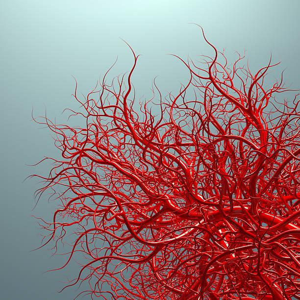 vascular system - blood vessels on blue vector art illustration