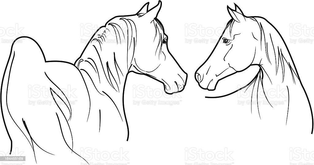vector arab horses vector art illustration