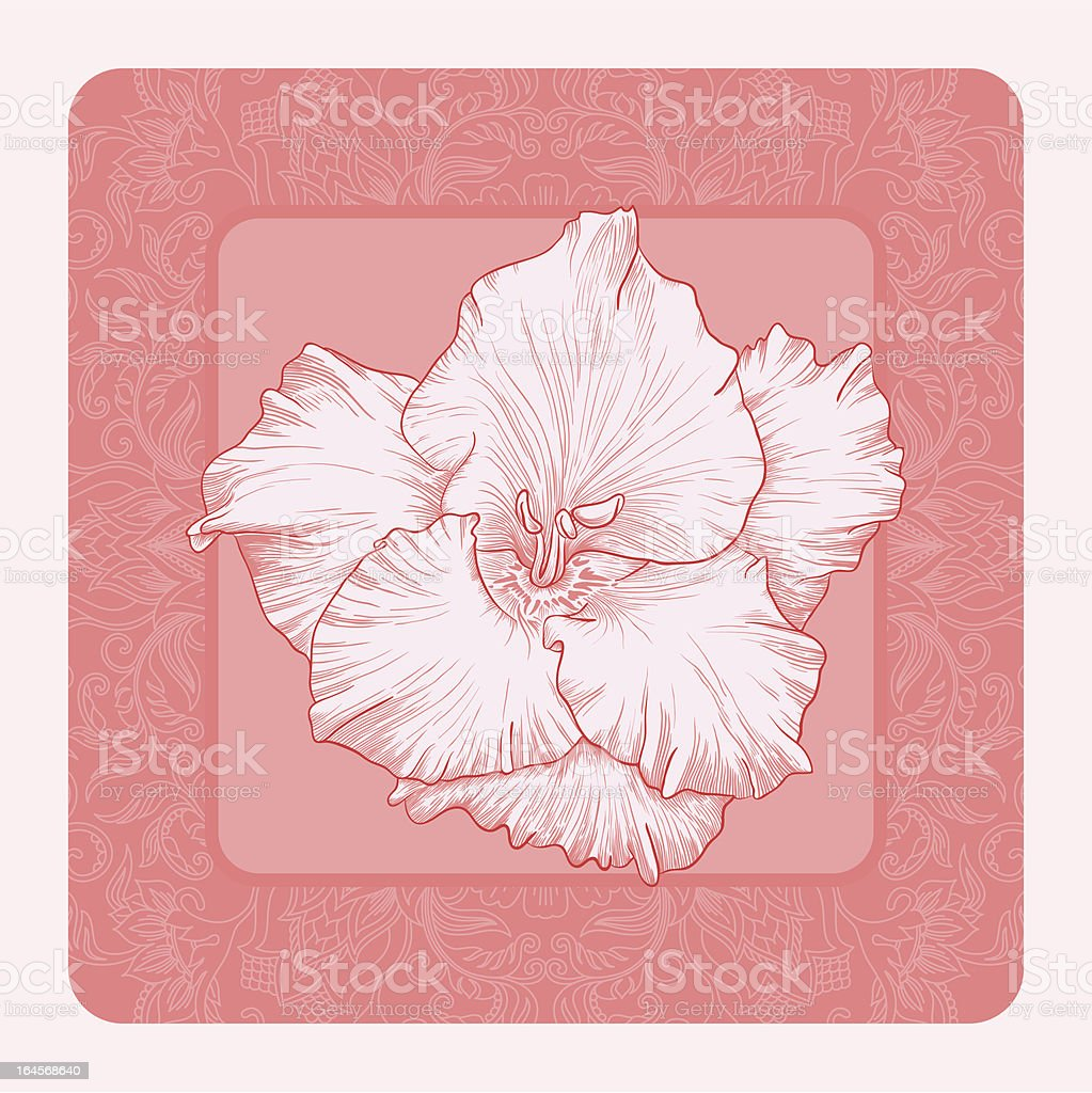 Vector illustration for greeting card with gladiolus. vector art illustration
