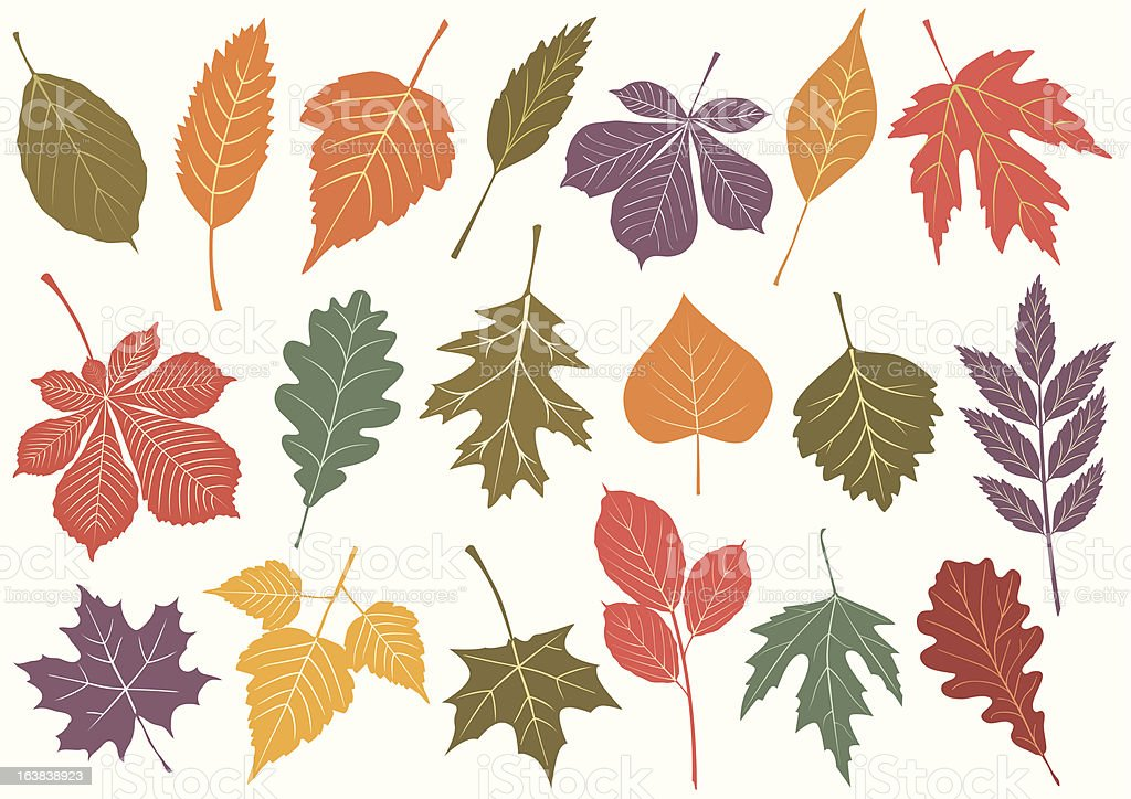 Vector illustration set of autumn leaves. royalty-free stock vector art