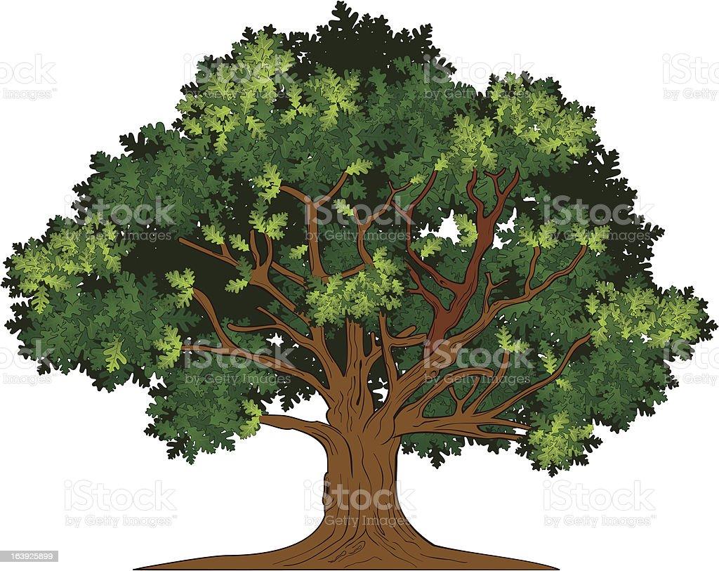 Vector oak tree vector art illustration