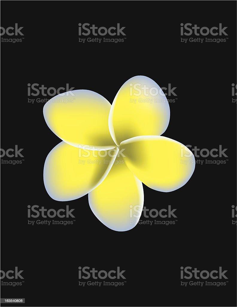 Vector Plumeria Flower royalty-free stock vector art