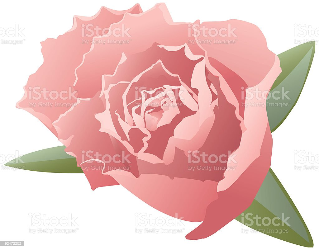 vector rose royalty-free vector rose stock vector art & more images of antique