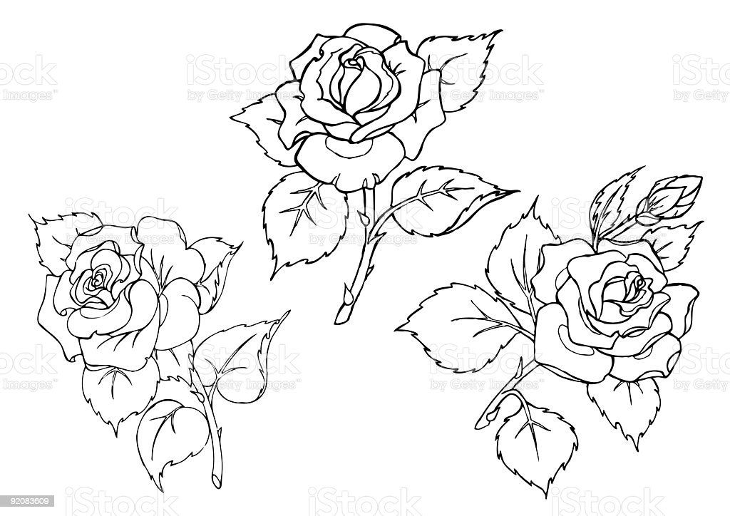 vector roses trace of freehand drawing royalty free stock vector art