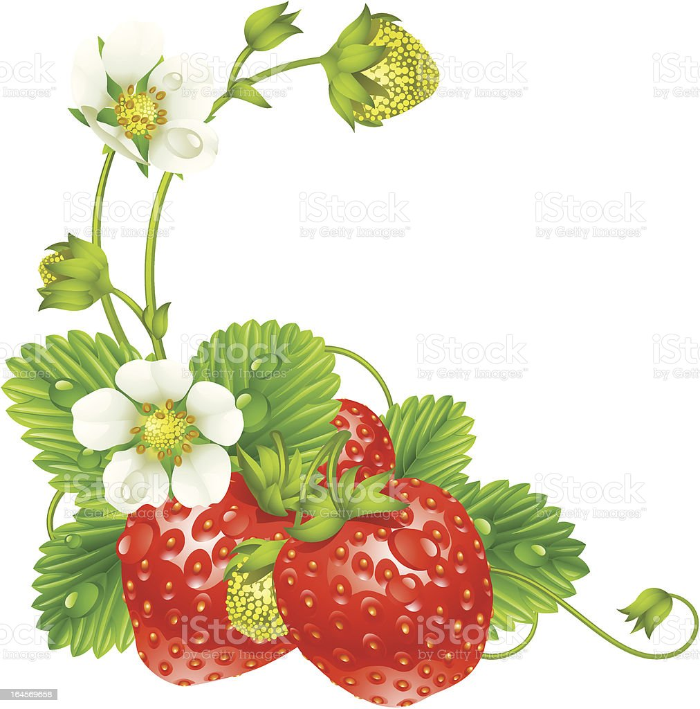 Vector strawberry frame isolated on white background vector art illustration