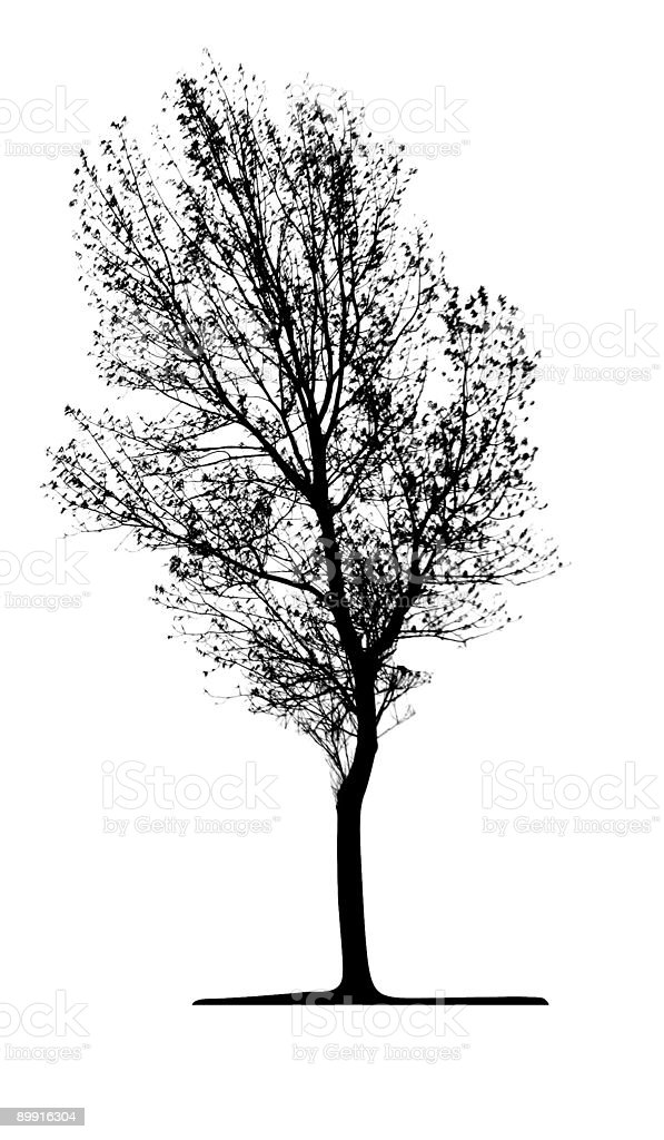 Vector  Tree Isolated royalty-free vector tree isolated stock vector art & more images of backgrounds