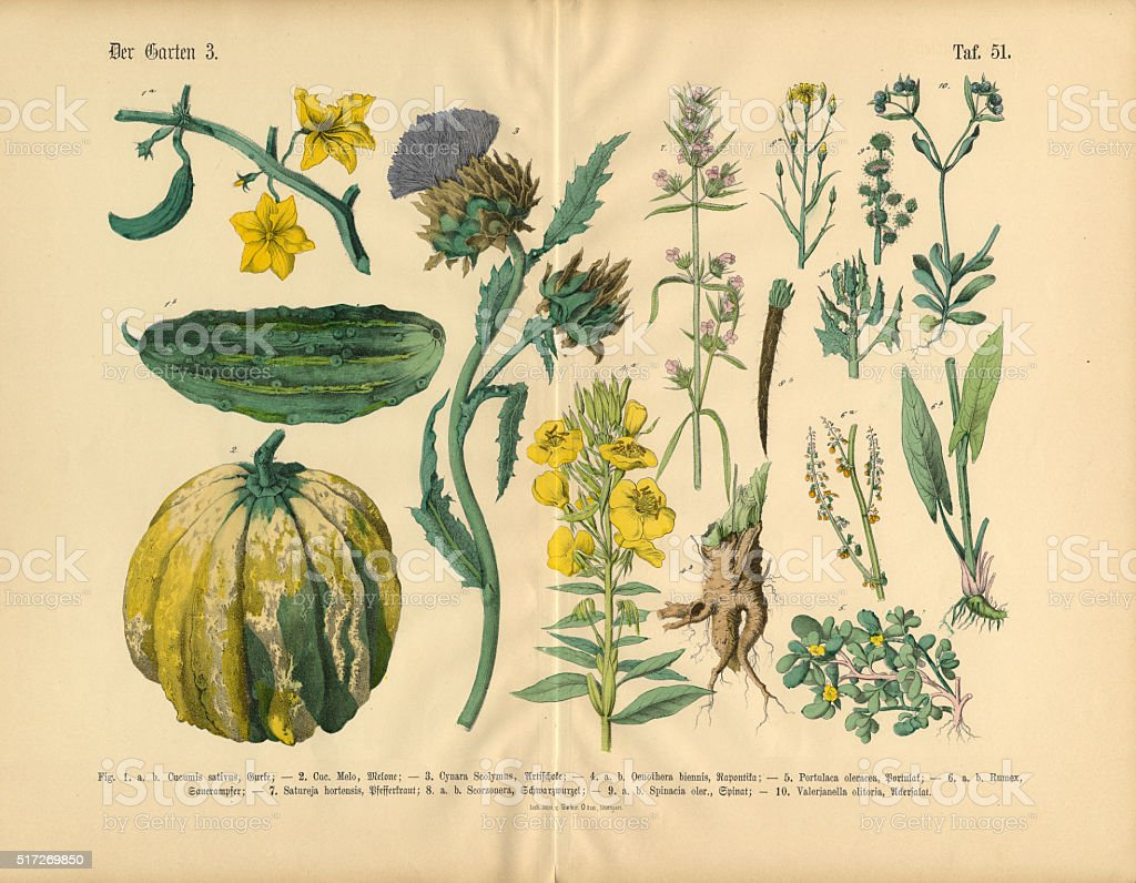 Vegetables and Flowers of the Garden, Victorian Botanical Illustration vector art illustration