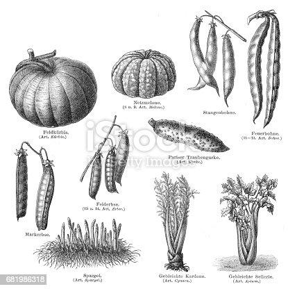 Vegetables engraving 1895