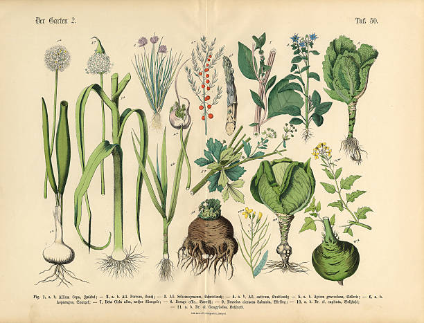 Vegetables, Fruit and Berries of the Garden, Victorian Botanical Illustration vector art illustration