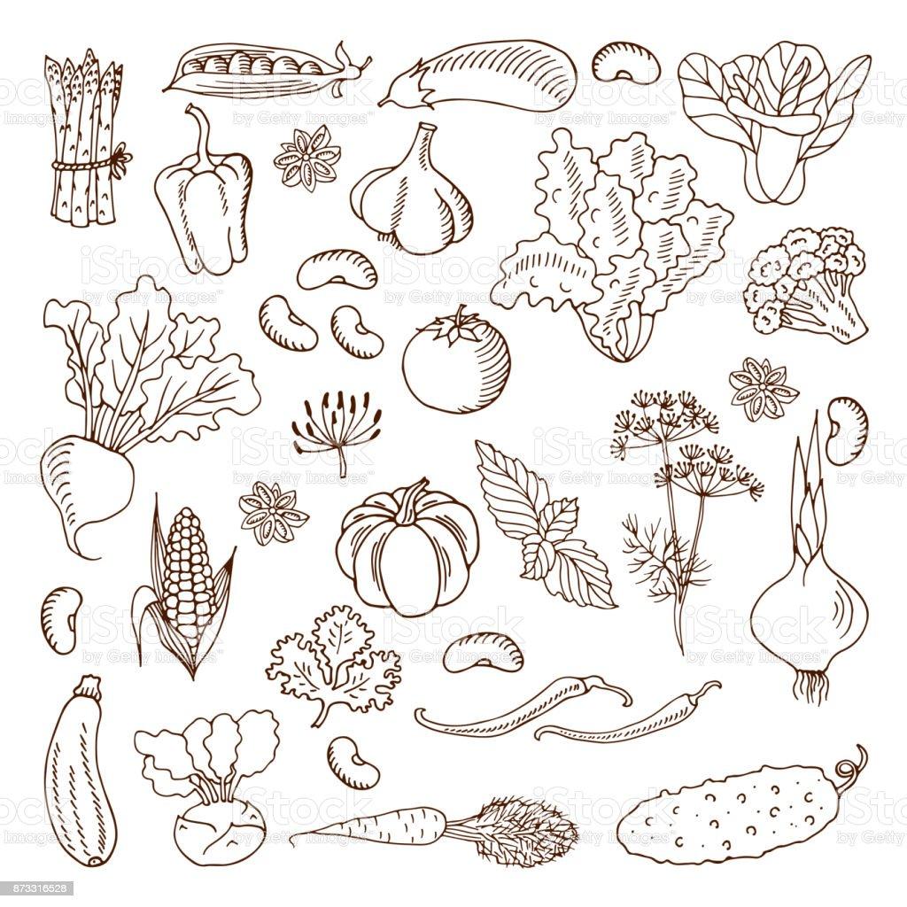 Vegetables. illustration.Design elements. vector art illustration
