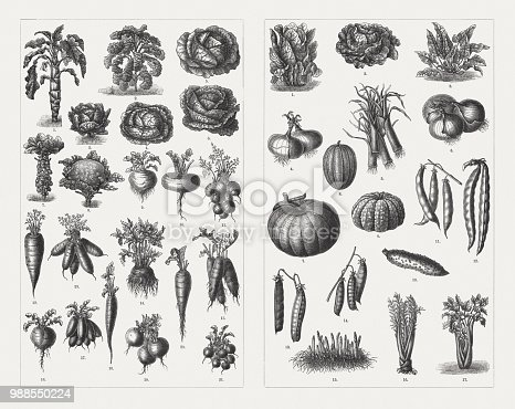 Vegetables, left side: 1 Marrow cabbage; 2) Kale; 3) Dutch herb; 4) White cabbage; 5) Erfurt herb; 6) Savoy cabbage; 7) Brussels sprouts; 8) Cauliflower; 9 - 10) Turnip; 11) Parisian carrot; 12) Frankfurt carrot; 13) Dutch carrots; 14) Erfurt celeriac; 15) Black winter radishes; 16) Erfurt round winter radish; 17) Oval radishes; 18) Long radish; 19) Munich beer radish; 20) Beetroot ; 21 Round radishes. Right side: 1) Yellow Parisian salad; 2) Yellow cabbage lettuce; 3) Spinach; 4) Pale red onion; 5) Leek; 6) Giant onion; 7) Pumpkin; 8) Ginger's Pride Melon; 9) Prescott Fond Blanc melon; 10) Parisian pickled cucumber; 11) Green bean; 12) Runner bean; 13) Marrow peas; 14) Chick-peas; 15) Asparagus; 16) Artichoke; 17) Celery. Wood engravings, published in 1897.