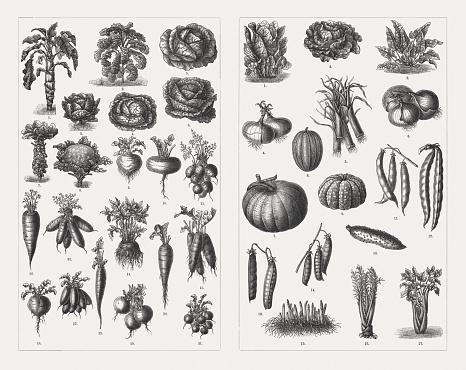 Vegetables, wood engravings, published in 1897