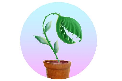 Venus flytrap plant in a pot