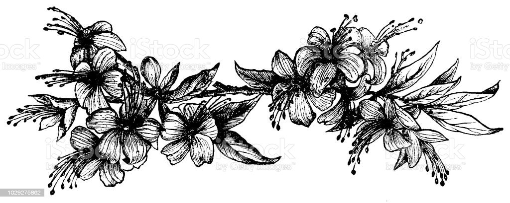 Victorian black and white engraving of a floral page decoration with victorian black and white engraving of a floral page decoration with flowers and foliage boys mightylinksfo