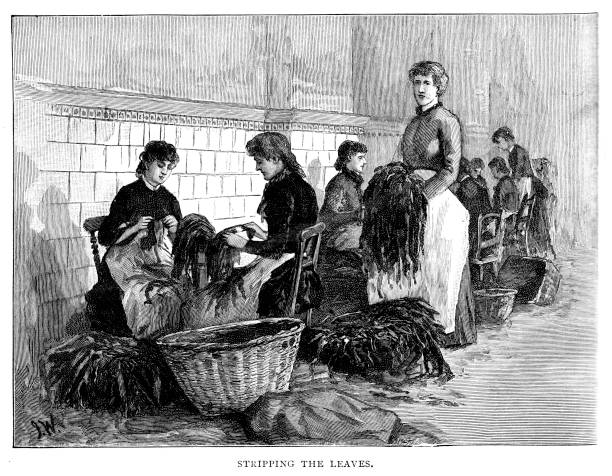 Victorian black and white  engraving of girls stripping the leaves in the Cope Brothers  Liverpool Lancashire tobacco factory; 19th century smoking and English factories by artist John Wallace; 19th century poverty and women; English Illustrated 1892 vector art illustration