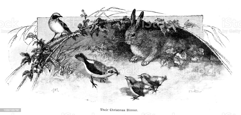 Victorian black and white illustration of birds feeding and a rabbit watching on, text says Their Christmas Dinner;19th century wildlife ; Boys Own Paper 1892 vector art illustration
