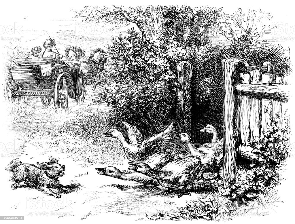 Victorian engraving of a country scene; people driving by in a pony and trap, a dog is chasing a flock of geese 1883 vector art illustration