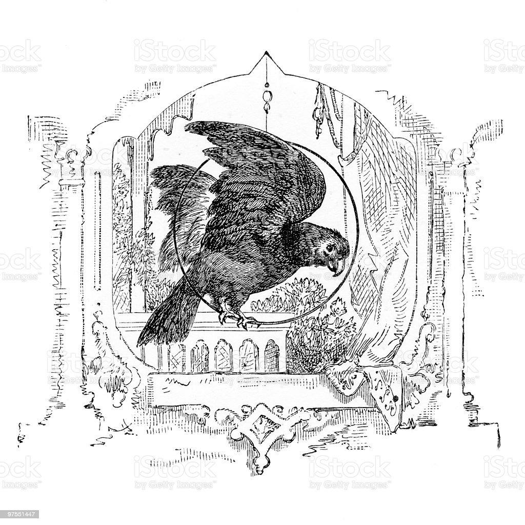 Victorian gravure de perroquet victorian gravure de perroquet – cliparts vectoriels et plus d'images de animal choyé libre de droits