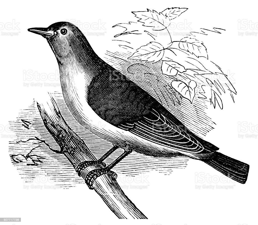 Animal Bird Canada Antique Branch