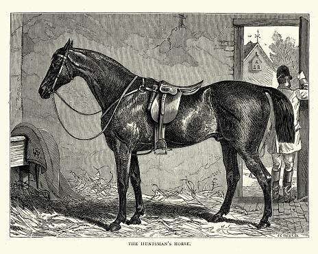 Victorian huntsman's horse, 19th Century
