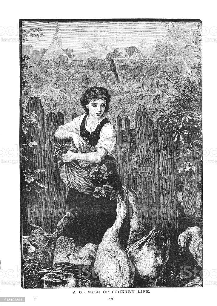 Victorian illustration country girl feeding geese English countryside vector art illustration