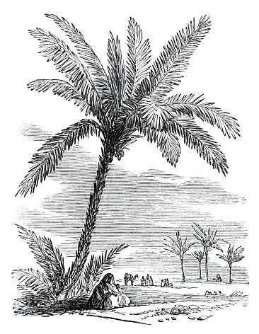 Victorian illustration - Desert oasis