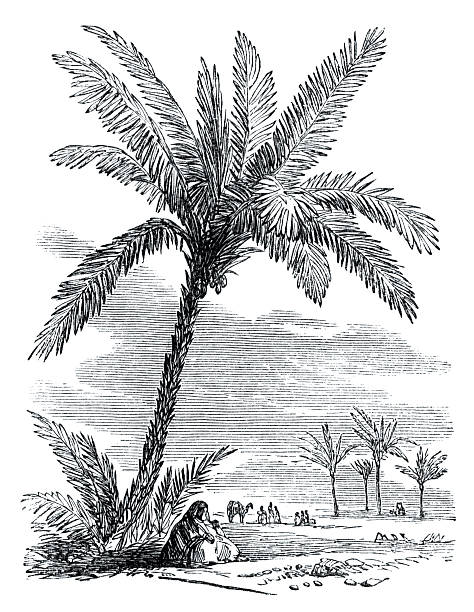 """Victorian illustration - Desert oasis An illustration from """"The Family Friend"""" published by S.W. Partridge & Co. (London, 1880). A desert oasis with palm trees which was used to illustrate a piece religious music. 1880 stock illustrations"""