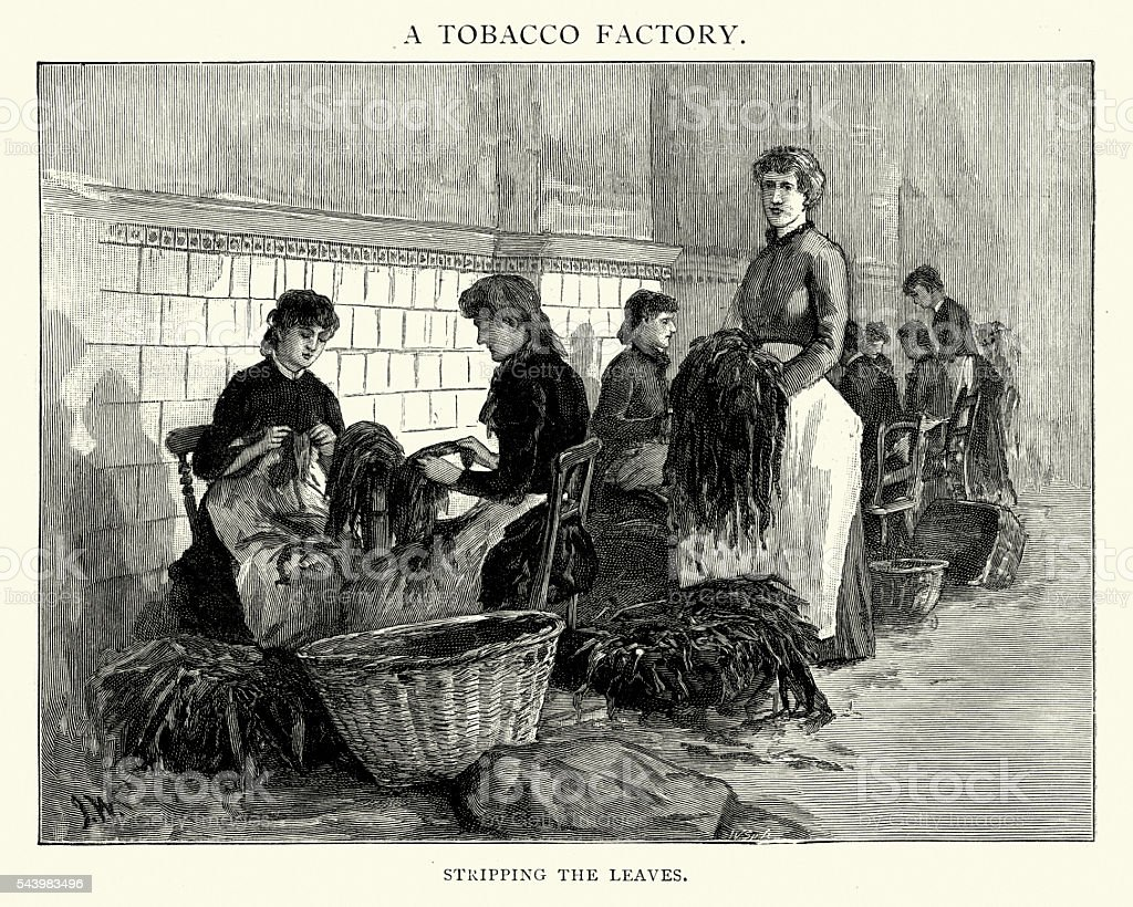 Victorian tobacco factory workers stripping leaves vector art illustration