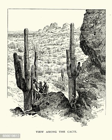 Vintage engraving of the view amoug the cacti in an America desert, 19th Century