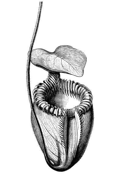食 虫 植物 コード