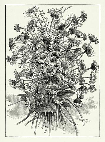 Vintage Bouquet of wildflowers, American Victorian Engraving, 1882