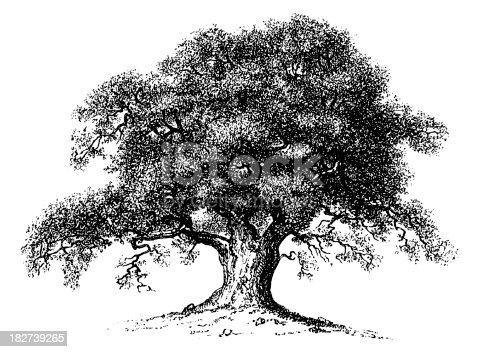 istock Vintage Clip Art and Illustrations   Oak Tree 182739265
