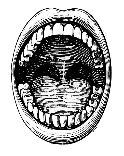 vintage cliparty i ilustracje/otwarcie jamy ustnej, zębów - otwór gębowy stock illustrations