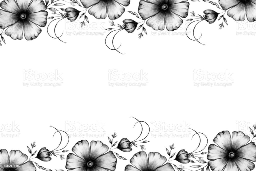 Vintage Floral Border In Pencil Drawing Flower Decorations Black And White Floral Frame Design For Cards Mothers Day Invitations Stock Illustration Download Image Now Istock