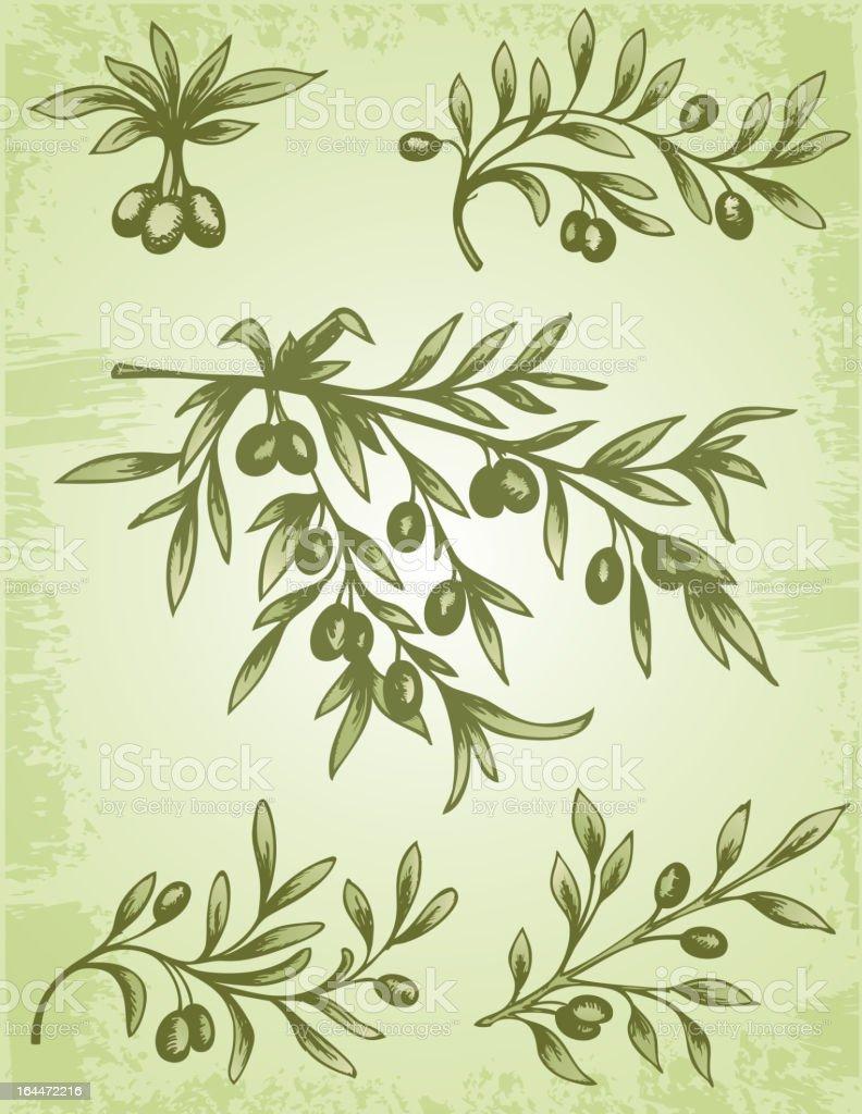 vintage olive branch vector art illustration