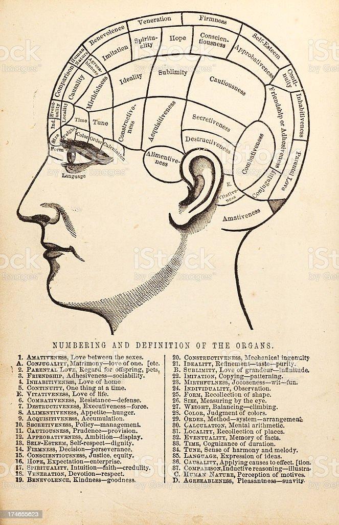 Ilustración de Vintage Diagrama Frenológica y más banco de imágenes ...