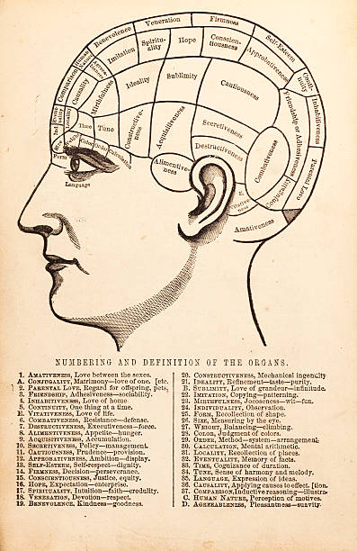 Vintage Phrenology Diagram Vintage etching of phrenological diagram with definitions of the various areas of the human skull.  19th c. etching from book published 1859. medical diagrams stock illustrations
