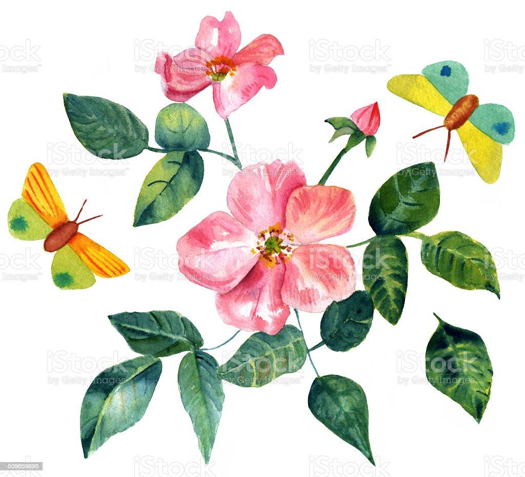 Stile Vintage Acquerello Disegno Di Rosa Con Farfalle Immagini