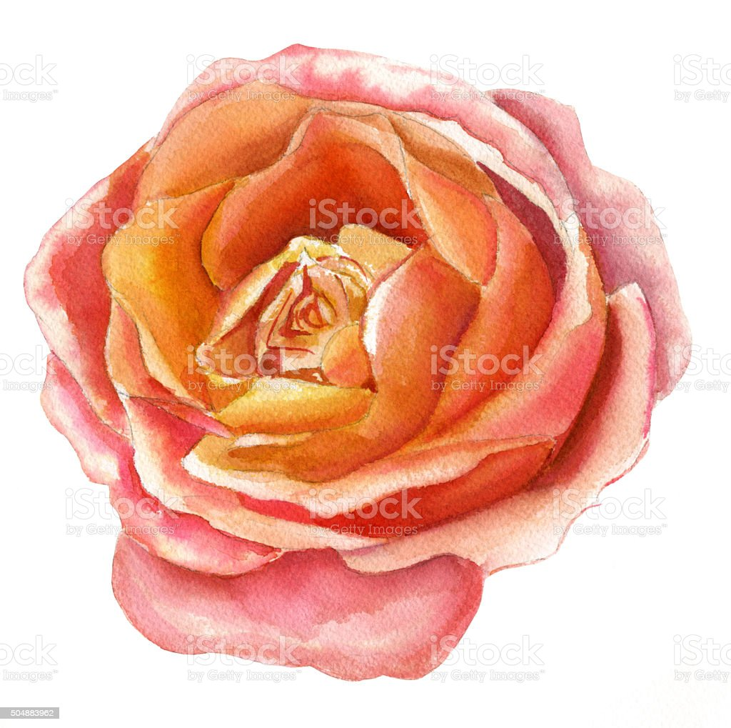 Vintage Style Watercolour Drawing Of Yellow And Pink Rose Stock