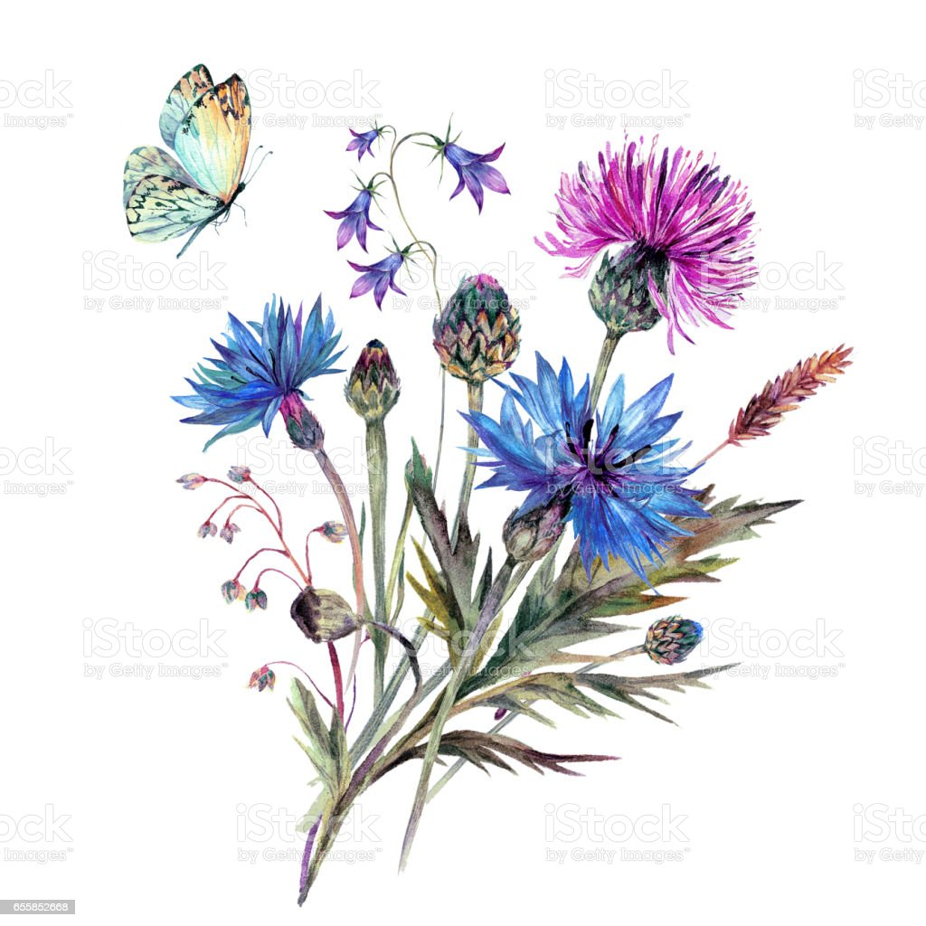 Vintage watercolor bouque of summer wildflowers. vector art illustration