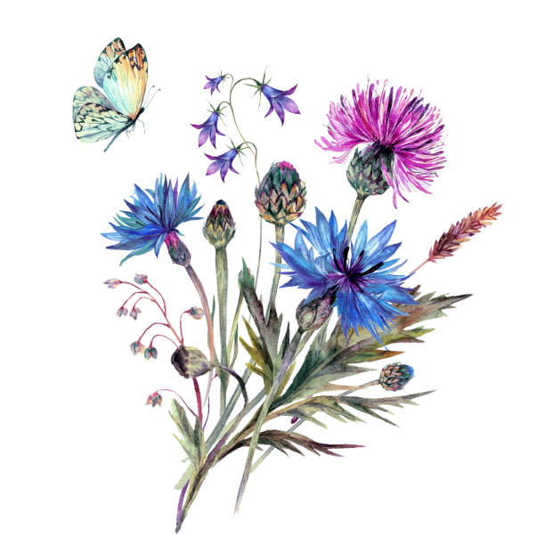 vintage watercolor bouque of summer wildflowers. - wildflowers stock illustrations, clip art, cartoons, & icons