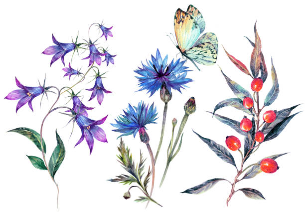vintage watercolor collection of wildflowers - wildflowers stock illustrations, clip art, cartoons, & icons