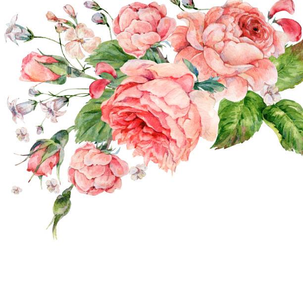 ilustrações, clipart, desenhos animados e ícones de vintage aquarela rosas inglês - bordas florais