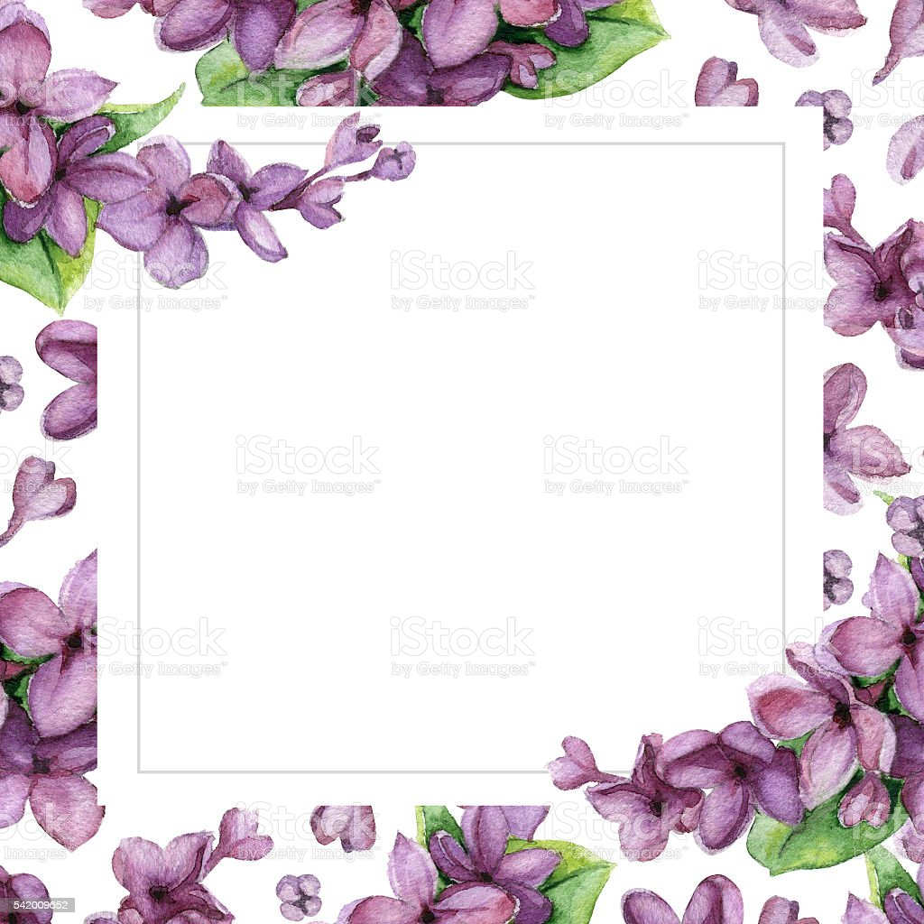 Violet Lilac On White Flower Background Floral Greeting Card Stock