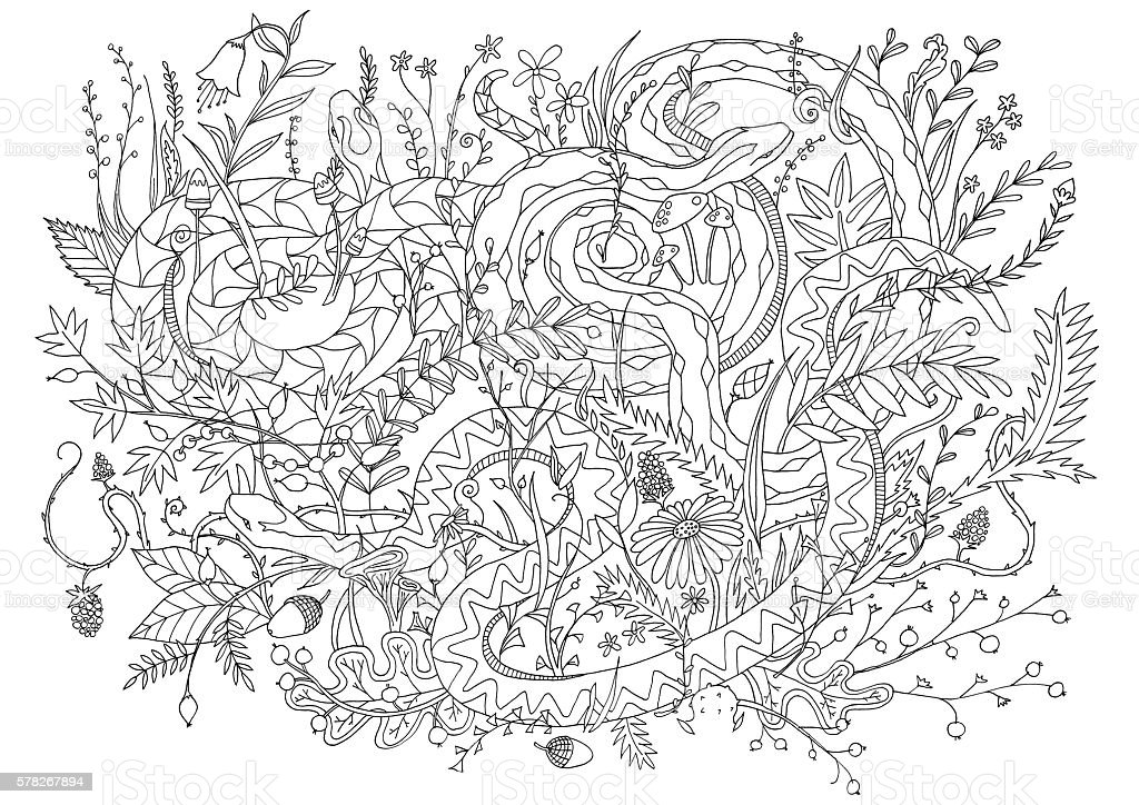 Vipers Snakes Camouflaged In Vegetation Adult Coloring Page Stress Relieving Stock Vector Art