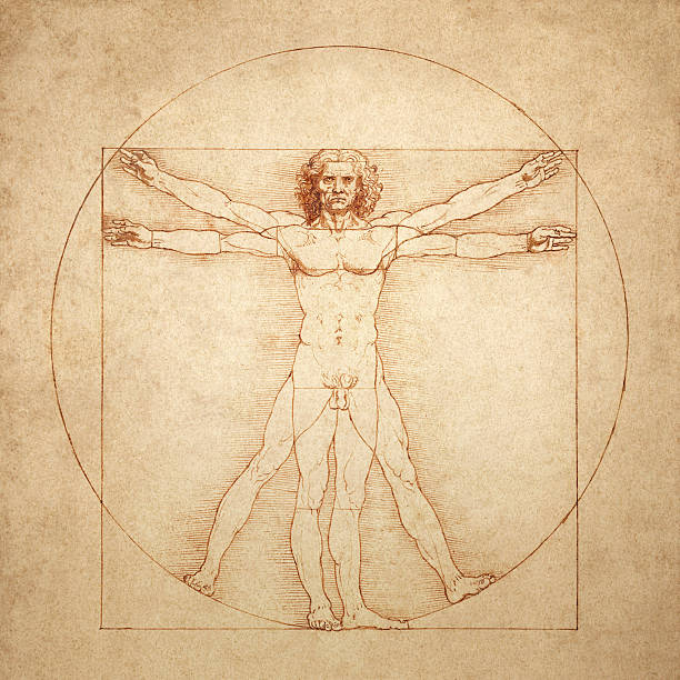 Vitruvischer Mann von Leonardo da Vinci – Vektorgrafik